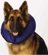 Protective Dog Collar Inflatable  better than a cone in Morris, Illinois